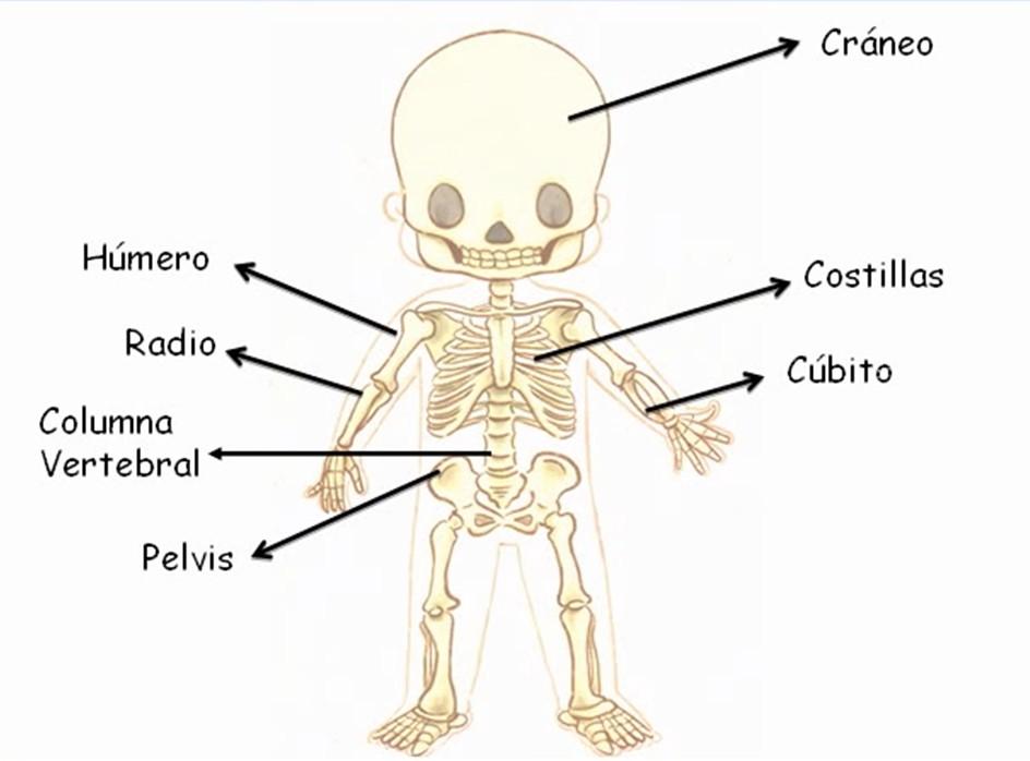 Articulaciones Del Cuerpo Humano Para Colorear - UKIndex